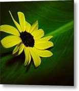 Shine Your Light Metal Print