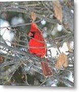 Shining Bright Red Metal Print