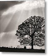 Shining Down Metal Print