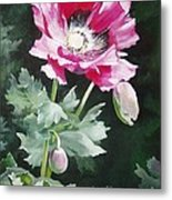 Shining Star Poppy Metal Print