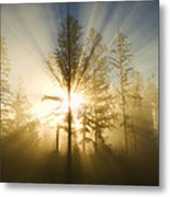Shining Through Metal Print by Peggy Collins