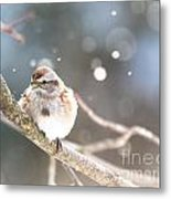 Shiny Tree Sparrow Metal Print