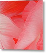 Shirley Poppies Metal Print