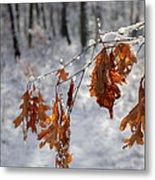 Shivering Oak Leaves Metal Print