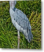 Shoebill Stork Metal Print