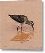 Shore Bird At Whitewater Draw Metal Print