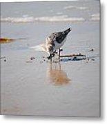 Shore Bird Metal Print