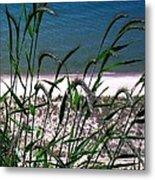 Shore Grass View Metal Print