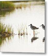 Shorebirds At Dusk Metal Print