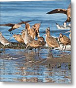 Shorebirds Flocking At Bodega Bay Metal Print