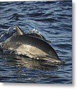 Short-beaked Common Dolphin Sea Metal Print