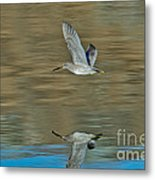 Short-billed Dowitcher And Reflection Metal Print