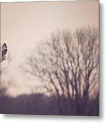 Short Eared Owl At Dusk Metal Print