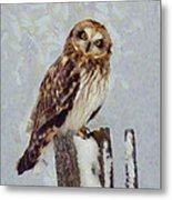 Short-eared Owl   Metal Print