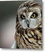 Short Eared Owl Portrait Metal Print