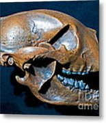 Short Faced Bear Metal Print