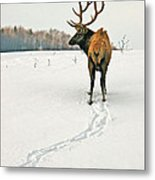 Shortest Distance Elk Metal Print