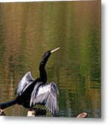 Show Off Metal Print by Sean Green