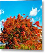 Shower Tree 18 Metal Print