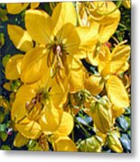Shower Tree 9 Metal Print