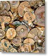 Shrooms Metal Print