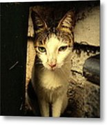 Shy Cat Metal Print