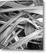 Shy Leaf Metal Print
