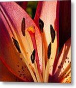 Shy Pink Lily Metal Print