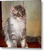 Siberian Forest Kitten II Metal Print