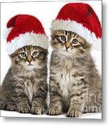Siberian Kittens In Hats Metal Print