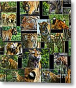 Siberian Tiger Collage Metal Print