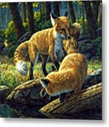 Red Foxes - Sibling Rivalry Metal Print