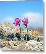 Side By Side - Old And New Metal Print