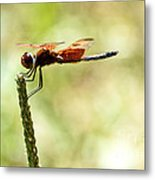 Side View Of A Calico Pennant Metal Print