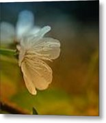 Side View Of An Apple Blossom Metal Print
