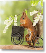 Side View Of Red Squirrel Playing Metal Print