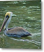 Sidelong Look From A Pelican Metal Print by Sarah Crites
