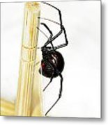 Sideview Of Black Widow Spider Metal Print