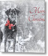Sienna - Merry Christmas Metal Print