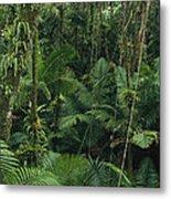 Sierra Palm Trees El Yunque Puerto Rico Metal Print