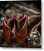 Sign Of Spring In Red Metal Print