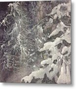 Silent Night Metal Print by Elizabeth Carr