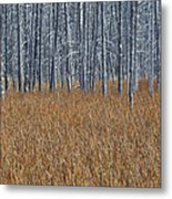 Silent Sentinels Of Autumn Grasses Metal Print