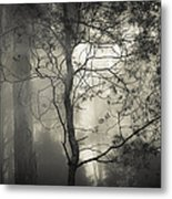 Silent Stirring Metal Print by Amy Weiss