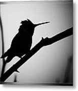 Silhouette Humming Bird Metal Print