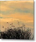 Silhouette Of Grass And Weeds Against The Color Of The Setting Sun Metal Print