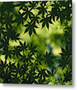 Silhouette Of Japanese Maple Leaves Metal Print