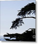 Silhouette Of Monterey Cypress Tree Metal Print