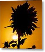 Silhouette Of The Sunflower Metal Print