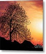Silhouette Of Tree Metal Print